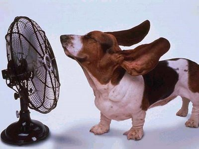 20091123190730-ventilador-y-perro.jpg