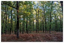 20101026225221-bosque.jpg