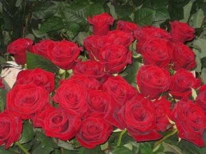 20110516231007-stl-jordi-2011-001.jpg