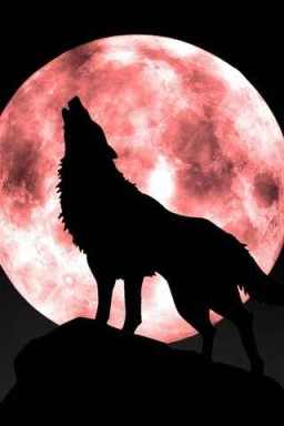 20111123222418-20111123195103-howling-wolf-moon.jpg